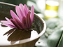 Water Lily Soothing Treatment
